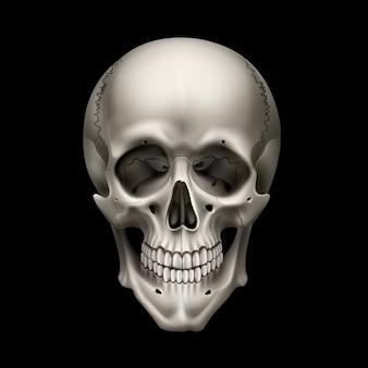 Ilustración de la vista frontal del cráneo humano realista