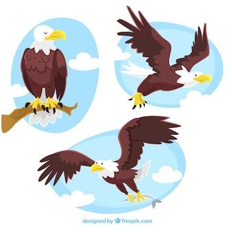 Ilustraciones de águila