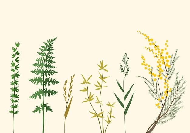 Ilustraciones botánicas