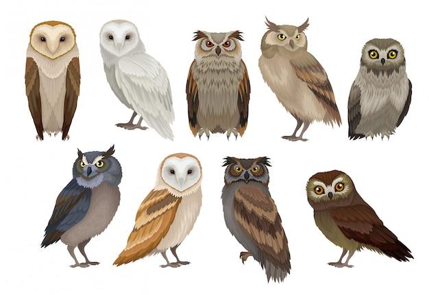 Ilustraciones coloridas en estilo sobre fondo blanco.