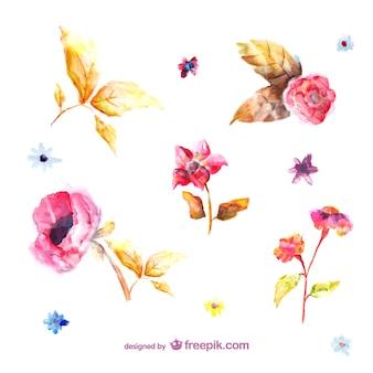 Ilustraciones de flores pintadas en acuarela