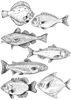Ilustraciones de peces sobre fondo blanco. pescados y mariscos frescos. ilustración