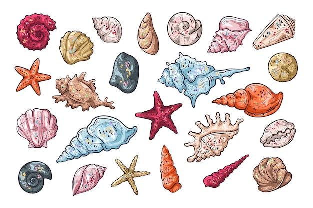 Ilustraciones vectoriales de dibujo. diferentes tipos de conchas marinas.