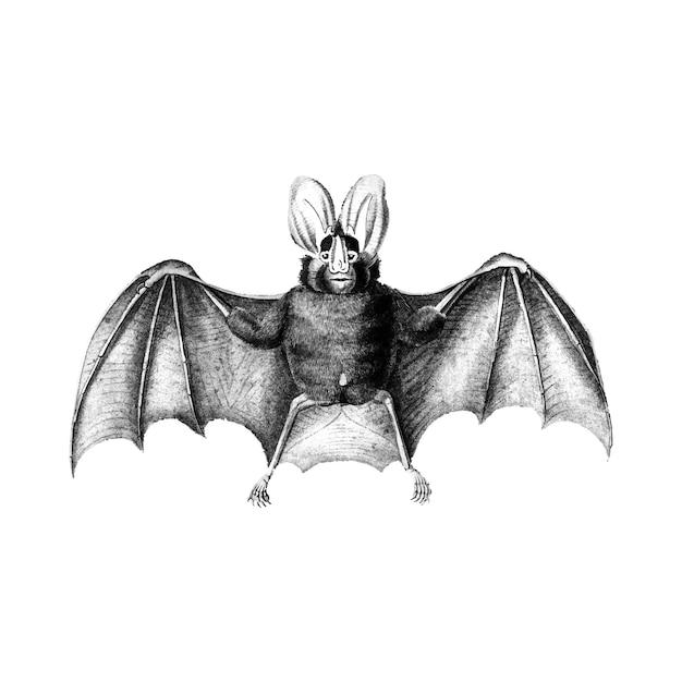Ilustraciones vintage de murciélago