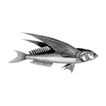Ilustraciones vintage de pez volador oceánico