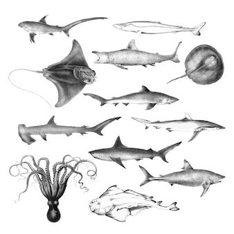 Ilustraciones vintage de la vida marina.