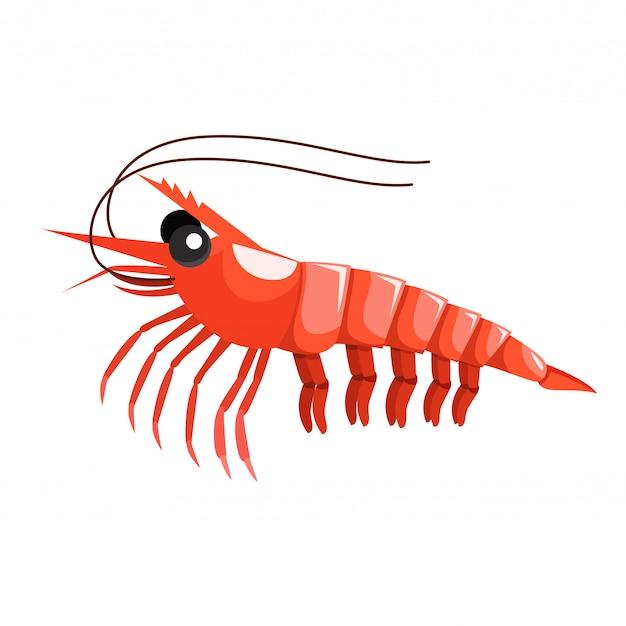 Ilustrador de camarón animal bajo el agua.
