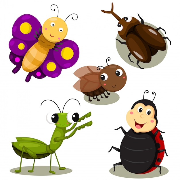 Ilustrador de dibujos animados de insectos lindos.