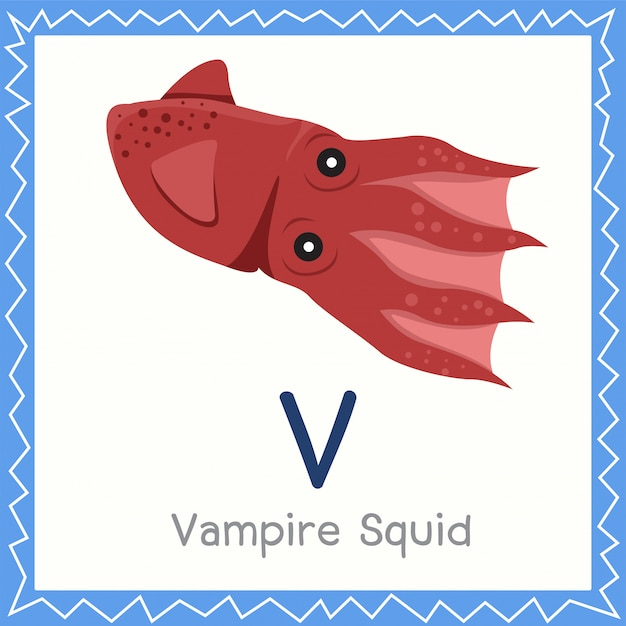 Ilustrador de v para vampire squid animal.
