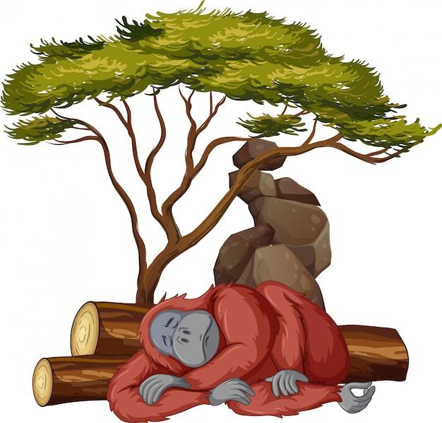 Imagen aislada de gorila durmiendo