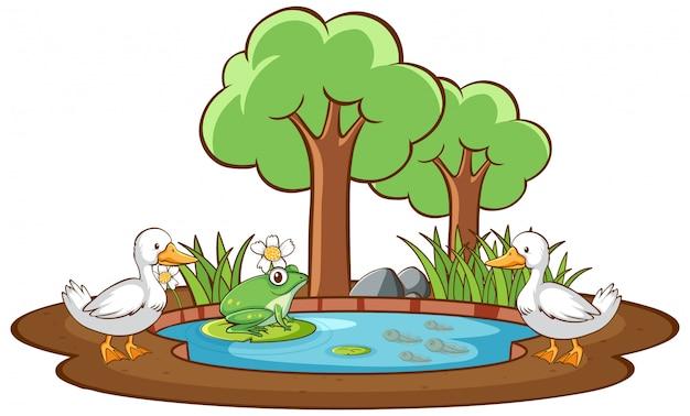 Imagen aislada de pato y rana en el estanque