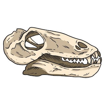 Imagen dibujada a mano del cráneo fosilizado del pequeño dinosaurio dinocephalia carnívoro. dibujo de ilustración de fósiles de dinosaurios de reptiles carnívoros. vector stock contorno silueta