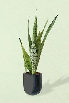 Imagen de vector de planta, decoración interior de casa en maceta de planta de serpiente