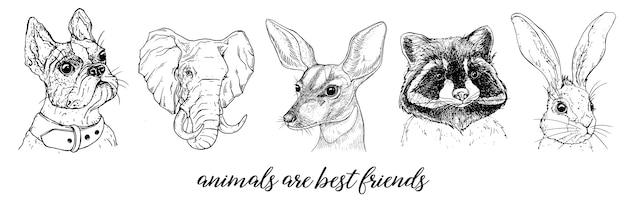 Imágenes gráficas vectoriales de animales.