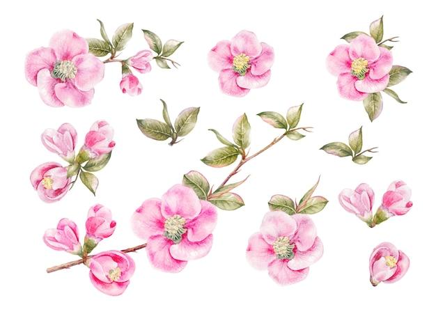 Impresionante colección de flores de primavera.