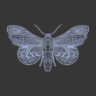Increíble mariposa mosca sobre fondo negro