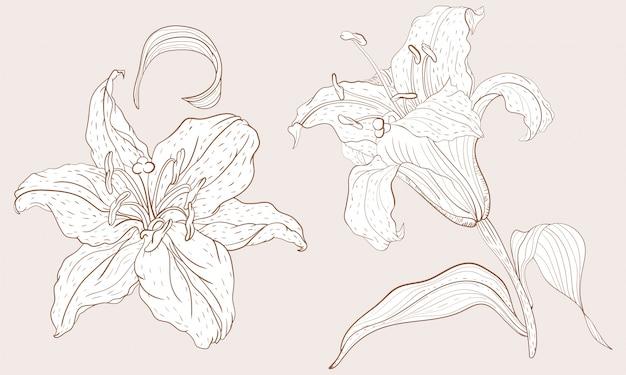 Inflorescencia de lirio oriental y flor de vapor