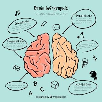 Infografía de cerebro dibujada a mano