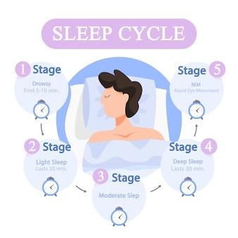 Infografía del ciclo del sueño. etapa del sueño durante