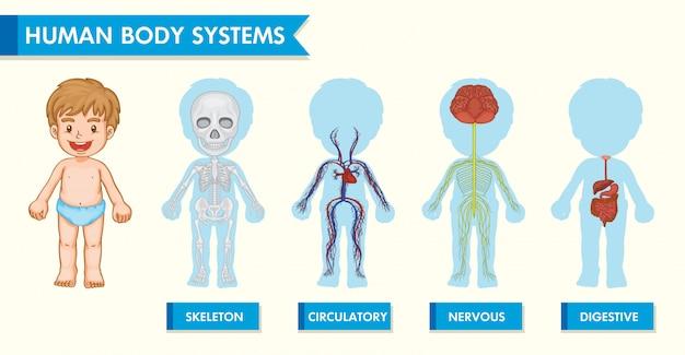 Infografía científica médica de los sistemas del cuerpo humano en niños.