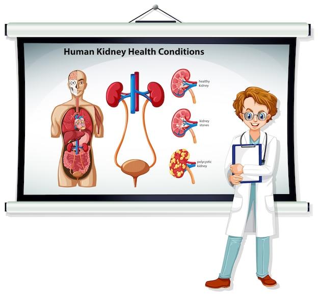 Infografía de condiciones de salud del riñón humano con personaje de dibujos animados médico