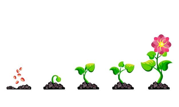 Infografía de crecimiento vegetal de fases.