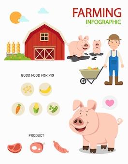 Infografía de granja de cerdos, ilustración