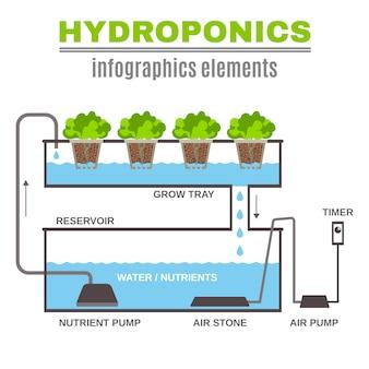 Infografía hidropónica de ilustración