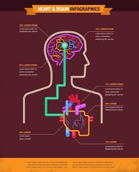 Infografía de ilustración de cerebro y corazón conectados