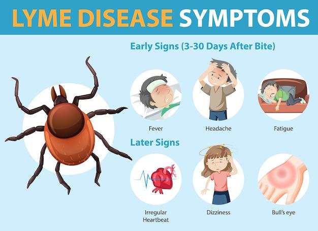 Infografía de información de síntomas de la enfermedad de lyme