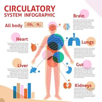 Infografía lineal del sistema circulatorio.