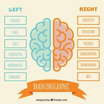 Infografía minimalista del cerebro humano en diseño plano