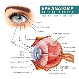 Infografía realista de anatomía del ojo