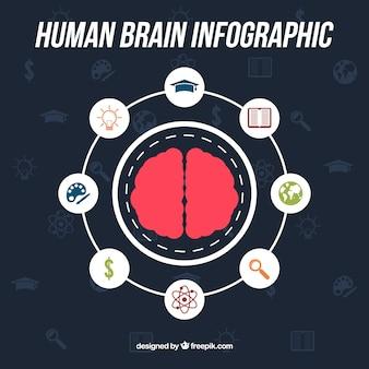 Infografía redonda de cerebro humano con iconos