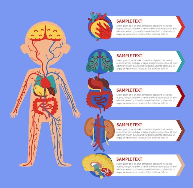 Infografía de salud con anatomía del cuerpo humano