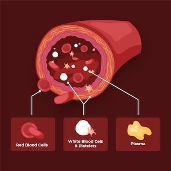 Infografía de sangre en diseño plano.