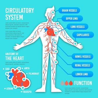 Infografía del sistema circulatorio plano