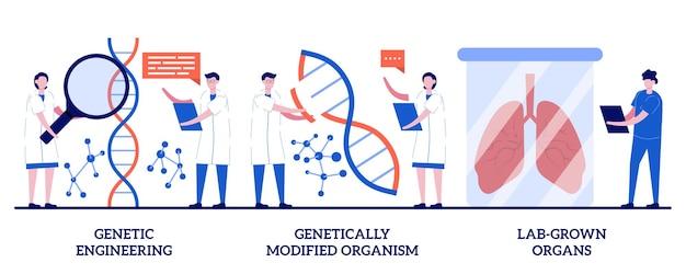 Ingeniería genética, organismo genéticamente modificado, concepto de órganos cultivados en laboratorio con personas diminutas. conjunto de bioingeniería. manipulación de adn, células madre, metáfora del trasplante.