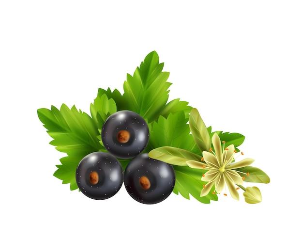 Ingredientes de té de hierbas realistas con hojas, bayas de grosella negra y flor de tilo