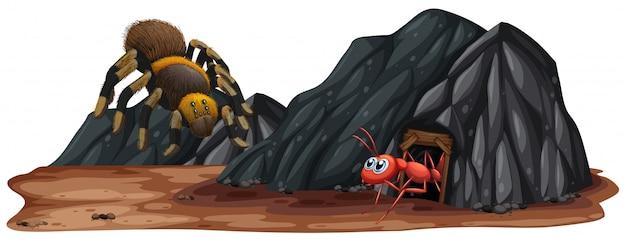 Insecto en la cueva de piedra