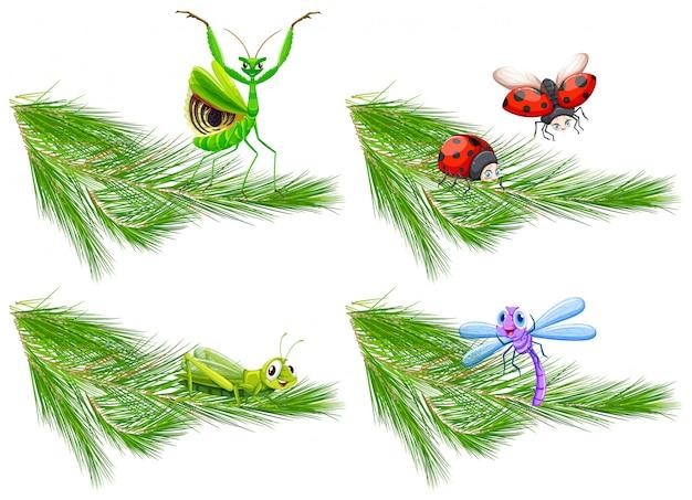 Insecto en la rama de pino