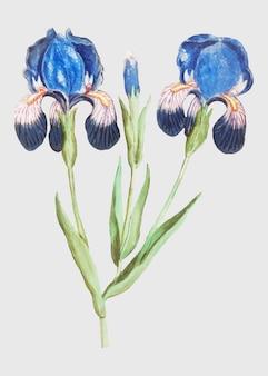 Iris morado en estilo vintage