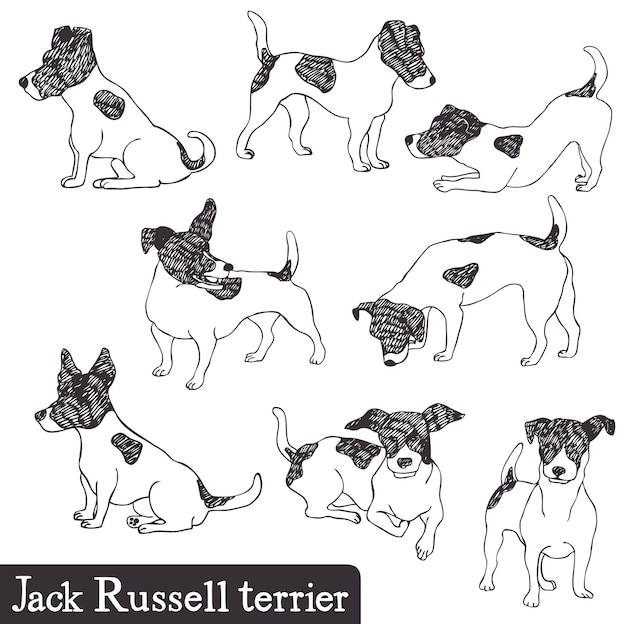 Jack russell terrier set
