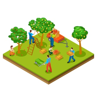 Jardín de frutas, cosecha, concepto isométrico de jardinería
