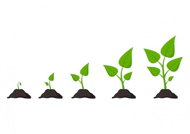 Jardinería. fases de cultivo de plantas. las semillas brotan en el suelo.