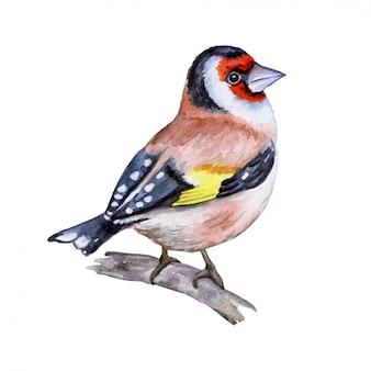 Jilguero pájaro
