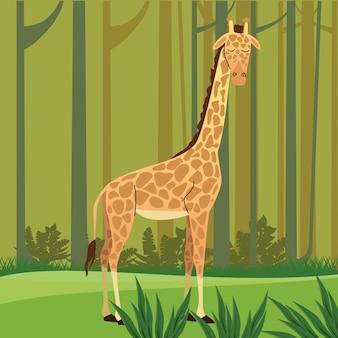 Jirafa africana salvaje en el paisaje forestal
