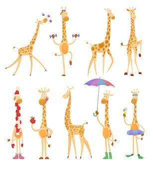 Jirafas divertidas. jirafas en un estilo de dibujos animados, está aislado sobre fondo blanco.