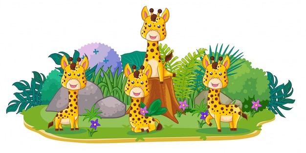 Las jirafas juegan juntos en el jardín.