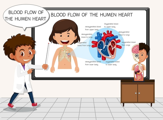 Joven científico explicando el flujo sanguíneo del corazón humano